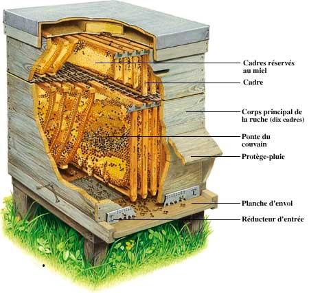 apiculteur a la reunion