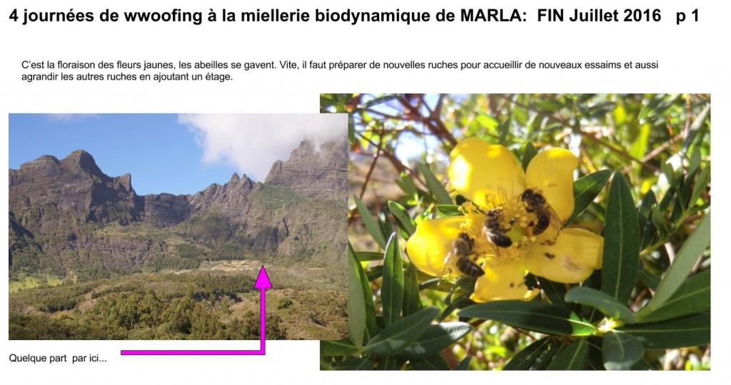 wwoofing à la miellerie biodynamique de Marla p 1